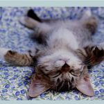 Image of kitten on his back in very relaxed pose, anxiety hypnosis, how to relieve stress, workplace stress, anxiety tips, how to reduce stress, stress relief, relaxation techniques, work related stress