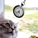 image of cat staring at swinging stopwatch - hypnosis galway, hypnosis westmeath, hypnosis ballinalsloe, hypnosis athlone, hypnotherapy, hypnotherapy galway, galway hypnosis
